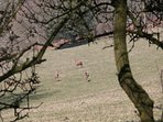 Red deer on the Quantocks