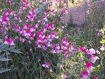 Flores en el jardín.
