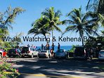 Whale watching in February from Kehena Beach