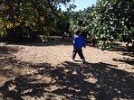 Il giardino recintato, con tanti alberi da frutto