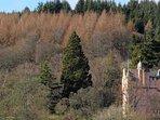 Craigievar Castle near Alford, part of the Castle Trail