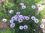 nombreux parterres fleuris sur place