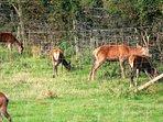 Scottish Deer Centre in Cupar