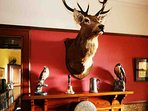 The monarch of the glen welcomes you on arrival