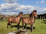 Ponies next door