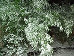 Le jardin cet hiver