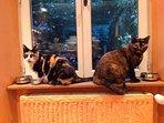 Nos deux petites chattes, Cookie et Cannelle