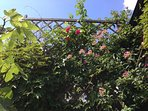 Végétation côté terrasse