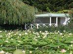 Chalet au coeur de la verdure avec piscine collective et mini golf