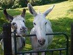 Barni & Bambi The Donkeys