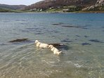 Our 2 Golden Retrievers at Crookhaven