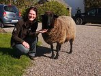 One of our Regular guests with her favourite Sheep