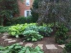 West Hosta Garden and Weeping Copper Beech