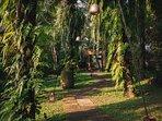 The Arsana Estate - Greenery surrounds
