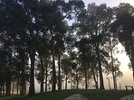Dawn breaking through the trees