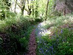 Couetilliec Cottages; Bluebell walk in May - a plethora of sylvan pathways await