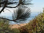 The world famous Torrey Pine...