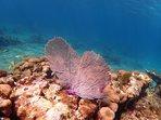 BC reef shots