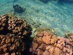 Turtle on Beachcomber reefs