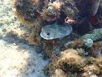 Beachcomber reef shots