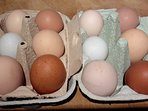 Free range eggs from our chickens, a pack of these are included in your welcome pack.