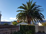 Cottage Chenin - Outside Palm Tree