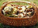 Try mushroom hunting, the popular Czech hobby