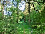 Couetilliec Cottages: Fir tree path leading to the woodland glade