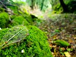 Nature walks at Ballyogan Doors are lush with moss covered rock, fern, native woods and marked paths