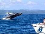 Whale watching in Semana (3 hour drive; only during whale watching season)!