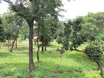 our site is surrounded by greenery