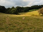 Behind Barnield cottage the owners' field is a good place to exercise both children and dogs!