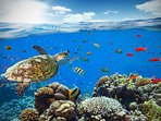 Many Great Snorkel Spots Near The Condo