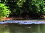 Enjoy trout fishing on the Little Red River.