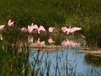 With hundreds of local bird species, the Birding Center is a great place to see the wildlife!
