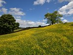 Nearby rolling meadows
