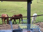 The horses paying a vist to The Aerial