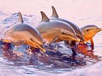 Take a dolphin-watching tour with the family