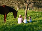 Picnic under the apple trees in front of the house.