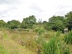 Coarse fishing pond