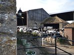 Have a guided tour around the farm