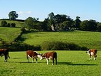 Rolling countryside surrounds you