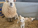 Meet some of the residents on the farm