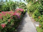 Lush Garden Walkways