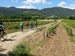 A vélo dans les vignes