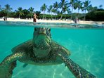 See endangered green sea turtles while you snorkel at some of the most beautiful beaches