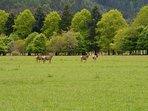 Deer on the estate