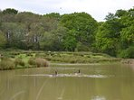 Surrounding pond area