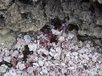 Shells at Sharks Hole are sometimes in abundance