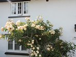 Beautiful roses outside Badger's Cottage in May and June